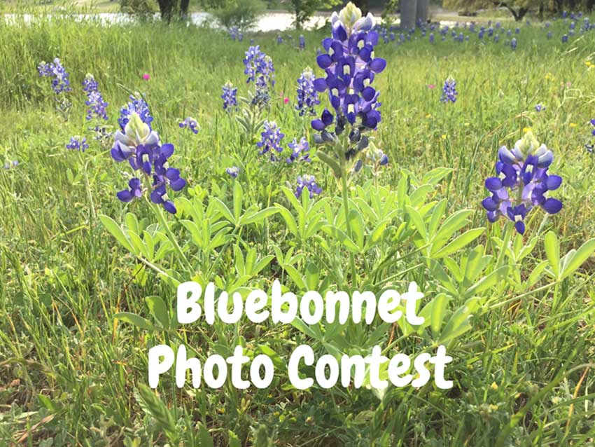 Bluebonnet Photo Contest